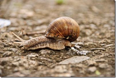 crawl-snail-2