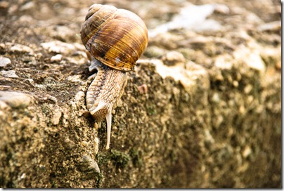 crawl-snail-5
