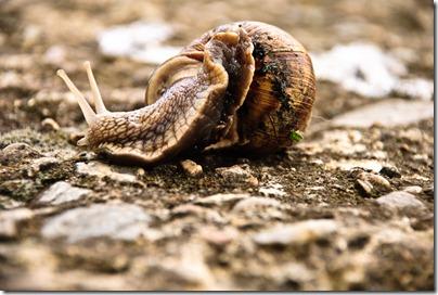 crawl-snail-4