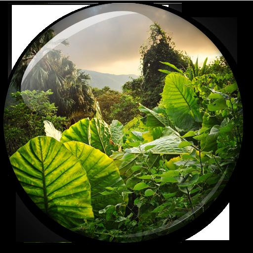 叢林動態壁紙 個人化 App LOGO-硬是要APP