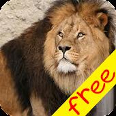 Baby Safari (Free)