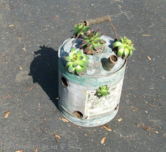 succulents in a vintage gas can