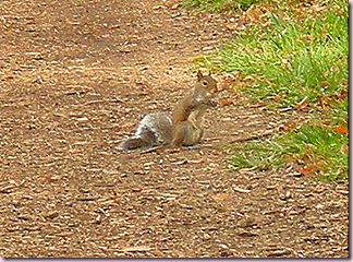 Squirrel2329