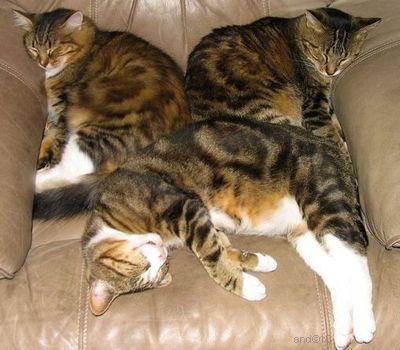 http://lh4.ggpht.com/_UTri2IteCmU/TR6Sf-AOK2I/AAAAAAAAAPQ/f6XUxYzwNWE/sleepgcats1.jpg