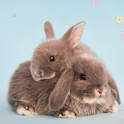 Rabbits HD wallpapers icon