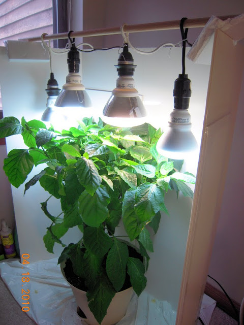 Soil Vs Aerogarden Growing Tomatoes And Peppers Indoors