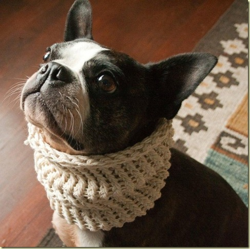dog cowl collar