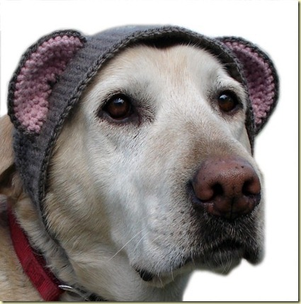 lab bear hat