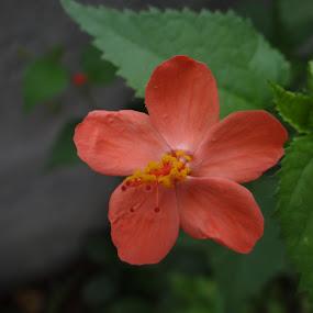 by Chandrakant Wankhede - Flowers Flower Gardens
