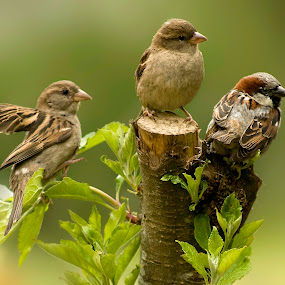 by Stephen Crawford - Animals Birds ( home, wildlife, places, birds, annbank,  )
