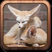 Fennec foxes HD Live wallpaper
