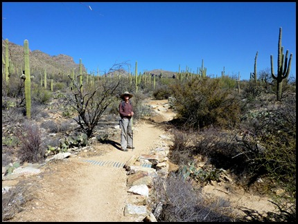Sabino Canyon, Bear Canyon Trail 2011