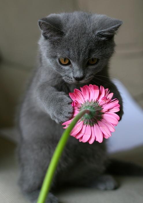 原来菊花是需要保养的
