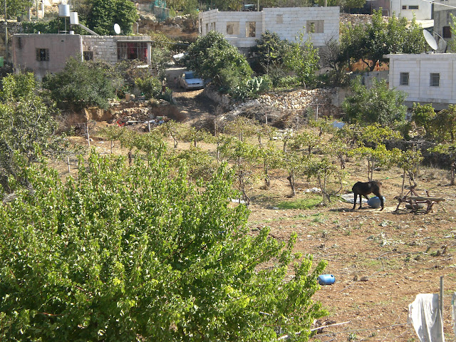 farming land in beit ummar - palestinian village