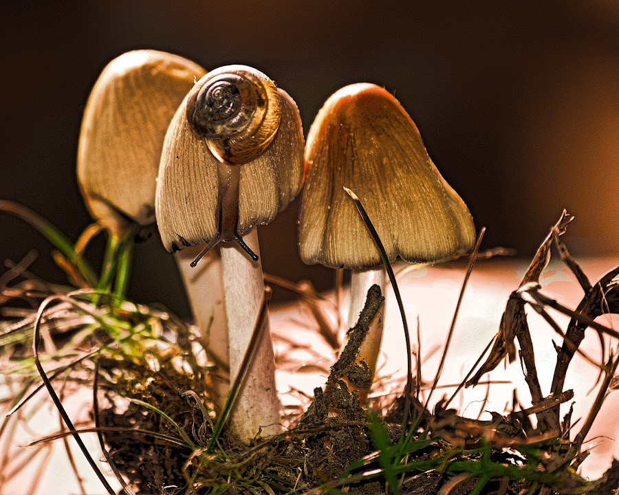 Autumn by Manuela Dedić - Nature Up Close Mushrooms & Fungi ( mushroom, nature, natural )