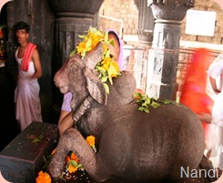 Nandhi at Bhima Shankar Temple