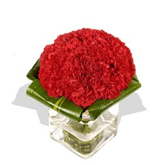 1689-red_carnation_cube