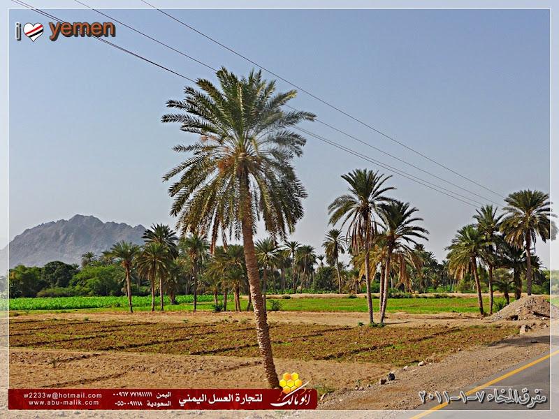 مكان جديد من اليمن السعيد . . . الخوخه P1320099.jpg