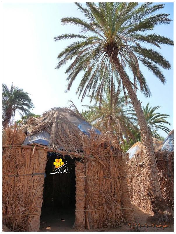 مكان جديد من اليمن السعيد . . . الخوخه 105.JPG