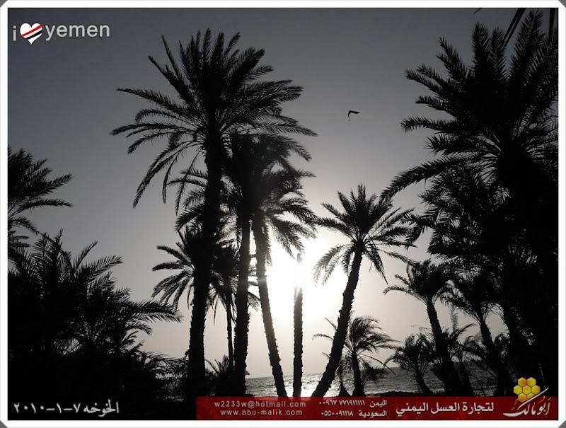 مكان جديد من اليمن السعيد . . . الخوخه 3.JPG