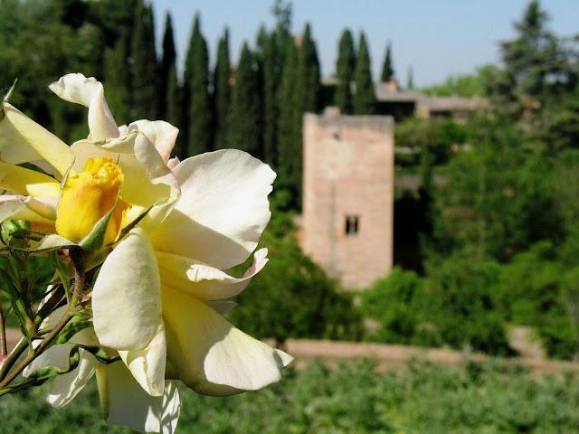 Rosa de la Alhambra.jpg