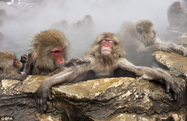 snow-monkeys (7)