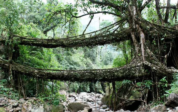 root-bridges (1)