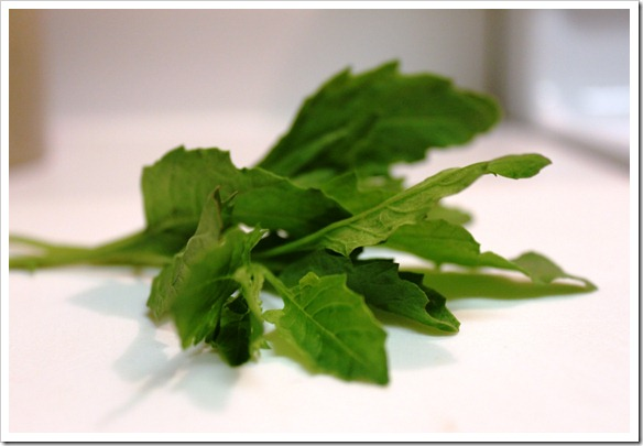 a sprig of epazote herb
