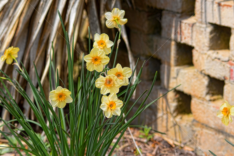 by Cynthia Lynn - Flowers Flower Gardens