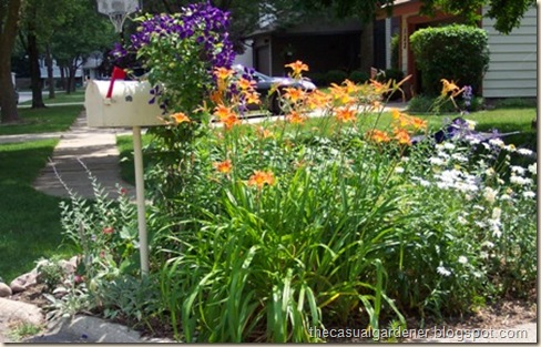Drought Tolerant And Hardy Consider A Daylily The