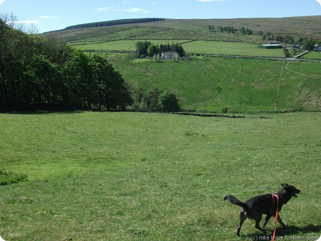 alston moor and happy dog