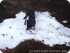 bruno destroys a small glacier