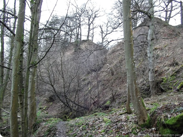 deepdale winter wood
