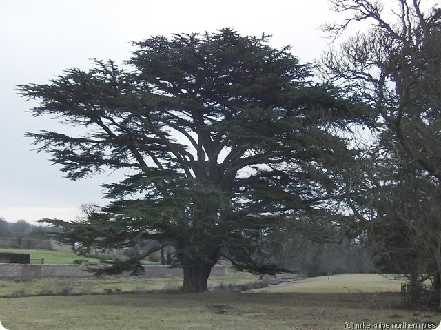 lartington hall parkland