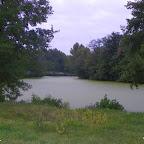 Au moment de la photo, le plan d'eau est entièrement recouvert de lentille d'eau.