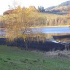 Lac des sapins à Cublize photo #219