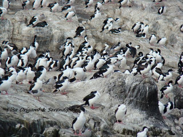 Isla de los Cormoranes, Canal de Beagle, Ushuaia, Argentina, Elisa N, Blog de Viajes, Lifestyle, Travel