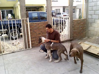 Oso fue nuestro invitado durante las fiestas de Navidad y Año Nuevo.
