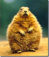 ground-hog-day1233584614