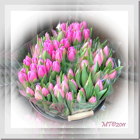 2011-01-10 tulips PSP collage4-mt
