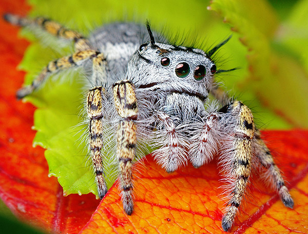 A not so cute spider