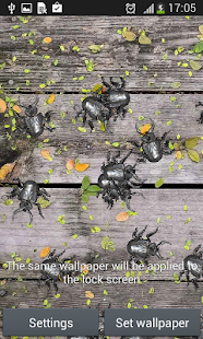 Insects Everywhere Live Wallpp- screenshot thumbnail