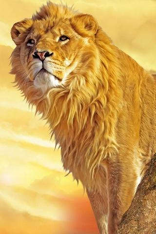 Lion Wallpapers HD - screenshot