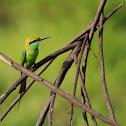Green beat-eater