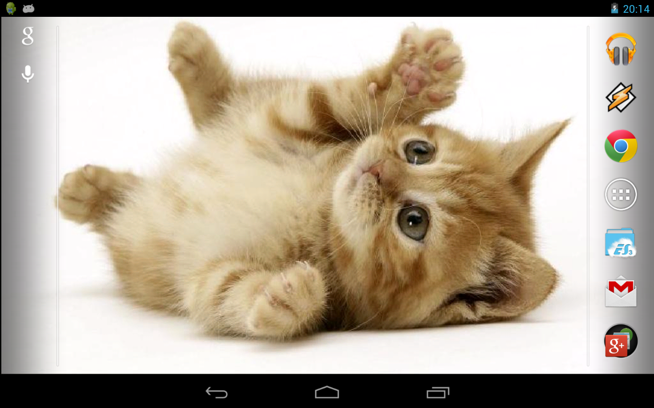 Playful ginger kitten- screenshot