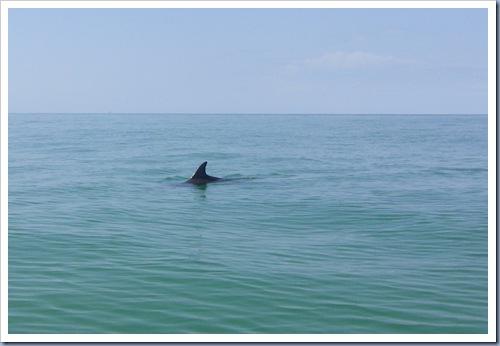 Dolfijn3