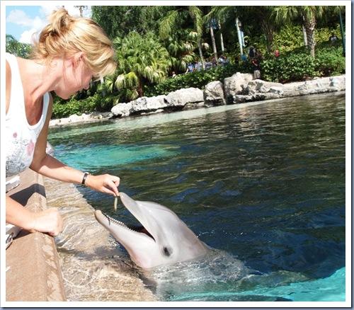 Dolfijnen voeren2