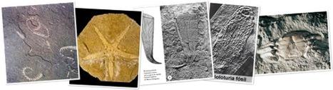 Ver fosiles invertebrados