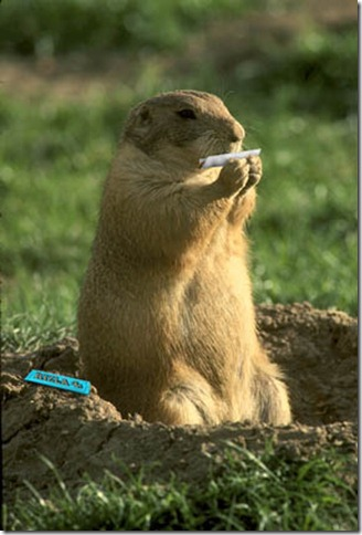 smoking,animal
