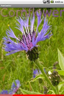 Wild Flowers 1 FREE- screenshot thumbnail